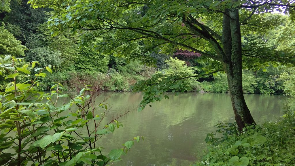 The River Wear in spring, Durham, UK